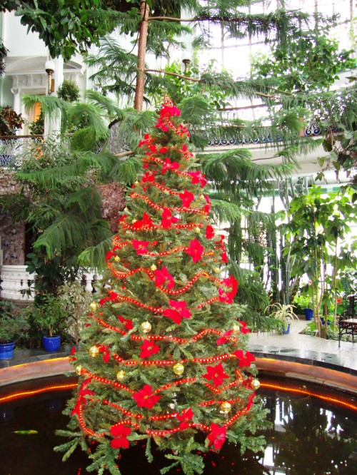 A.Kupšytė.Kalėdos.Žiemos sodas
